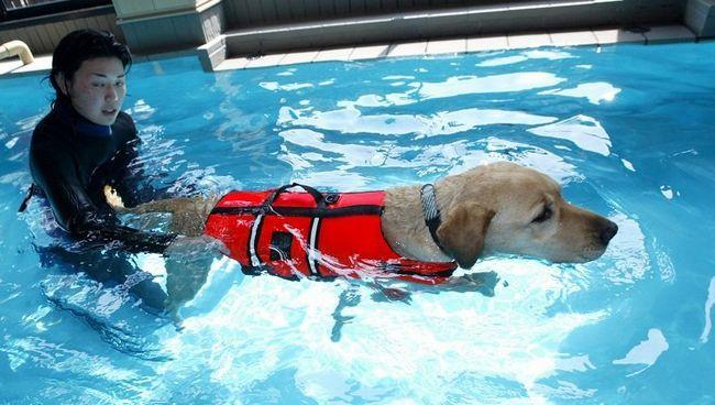 TOKYO - 04 mai: Un câine primește terapie la Oedo Resort and Spa 4 mai 2004 în Tokyo, Japonia înot. Japonia este pe o vacanță lungă (de la cinci.1-5.5) și unii proprietari de animale de companie lăsați animalele lor la spa. Centrul spa oferă terapie de înot și aromaterapie printre alte activități potaie răsfăț. (Fotografie de Koichi Kamoshida / Getty Images)