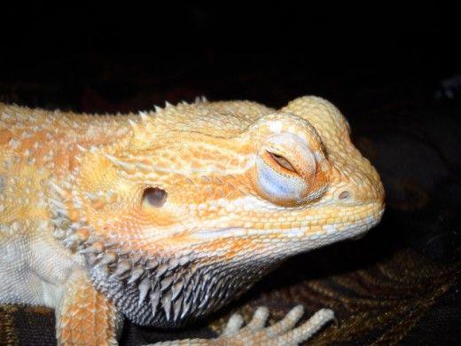 ochii umflati într-un dragon.