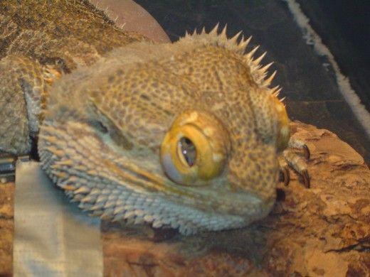 ochii umflati Droopy, acest lucru nu este normal sau sănătos.
