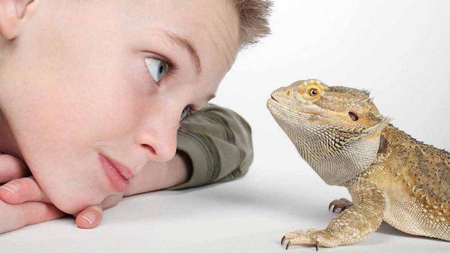 dragon și băiat
