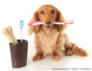 Beneficiile uleiului de nucă de cocos pentru dinți câini
