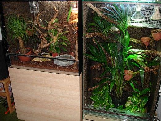 Unul dintre avantajele de reptile pentru animale de companie are o bucată mică de pădure tropicală, deșert, sau un alt habitat în casa ta.