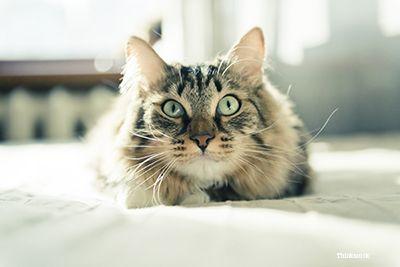 Cat holbezi
