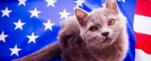 Nume mari pentru pisici patriotice