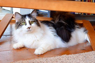 Cat sub scaun