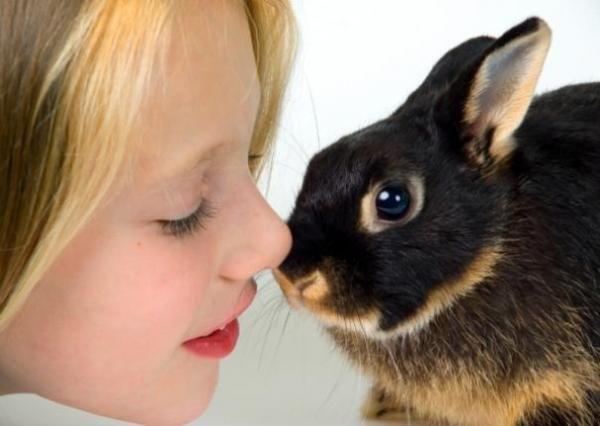 Cum să aibă grijă de un iepure pitic