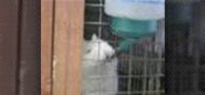 Alege un iepure pentru un animal de companie de familie
