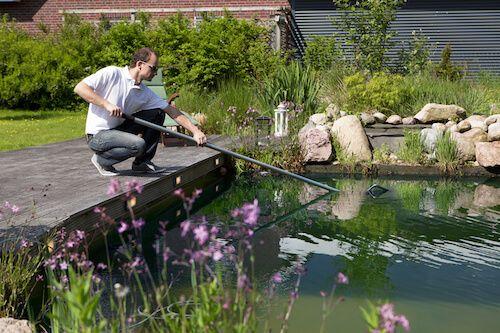 Clean A Goldfish Pond