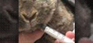 Dă medicamente la un iepure