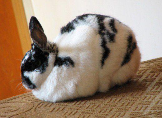 Chifle bunny pe a douăsprezecea ziua ei.