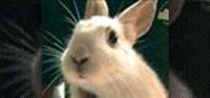 Ai grijă de iepuri