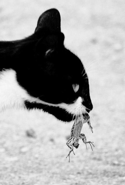 Kitty: 1 Lizard: 0