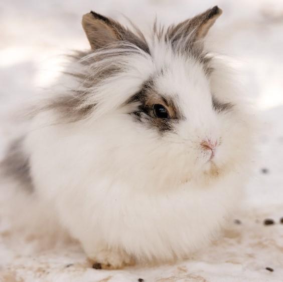 Păr de iepure meu este încurcat - Îngrijirea la domiciliu