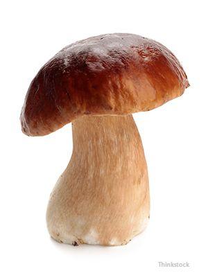 Ciupercă