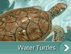 apă-broască țestoasă