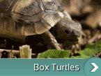 box-țestoase