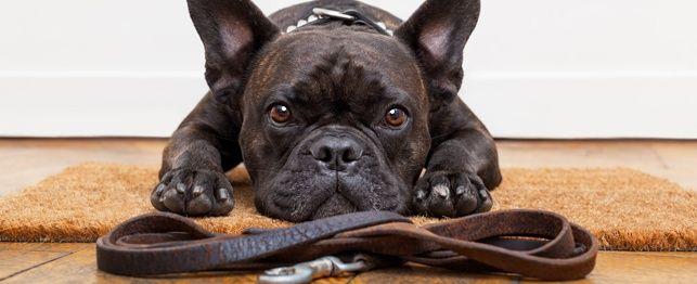 Sta! Stau! Citit! 5 noastre instrumente de instruire preferate pentru câini