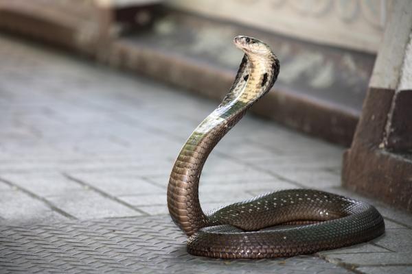 Cele 10 cele mai periculoase animale din Asia