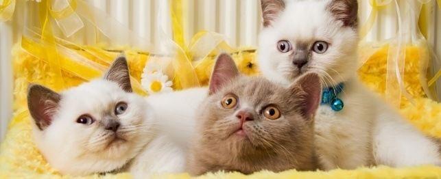 Ghidul final pentru numirea pisica sau pisicuta