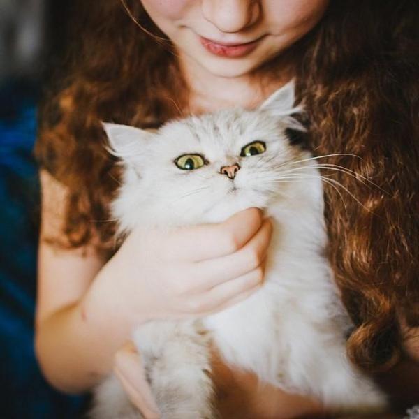 Sfaturi pentru a face haina pisicii tale strălucitor