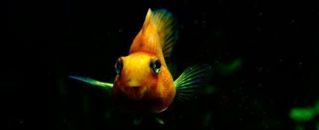 Top 20 de pește de apă dulce