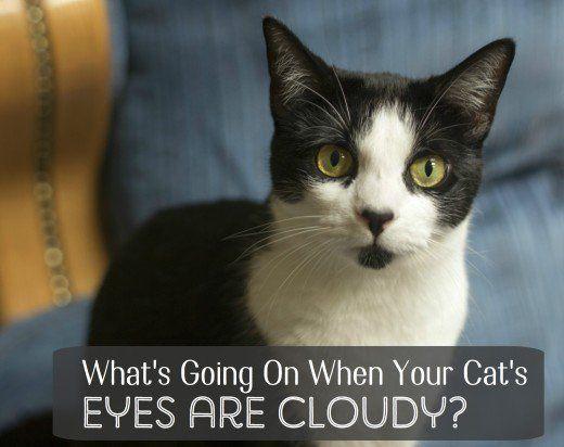Tulburări care pot provoca nebulozitate ochi includ cheratită, glaucom, si cataracta.