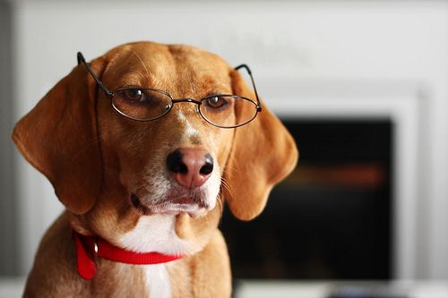 ochi-proptoza-in-câini