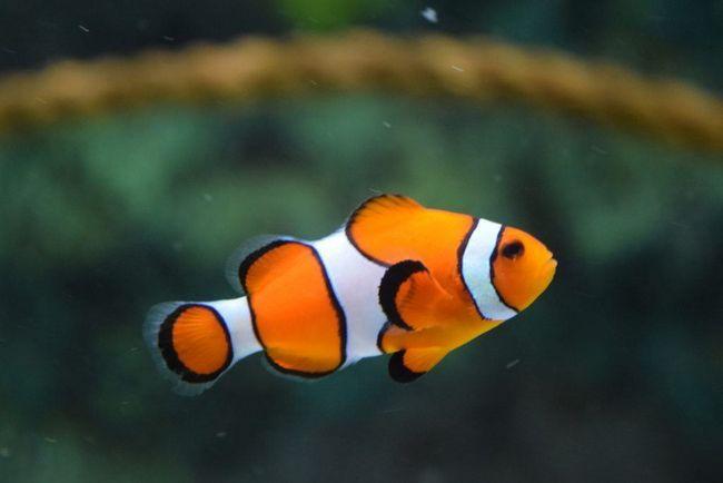Ce se poate face cu pește de birou în timpul vacanței